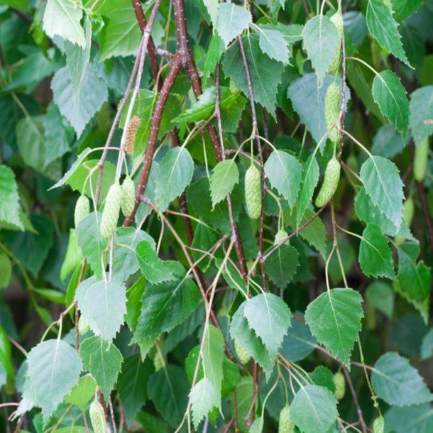 Ďalšie bylinky, ktoré na vás čakajú - Babyweb.sk